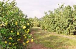 Plantaciones en las tierras bajas