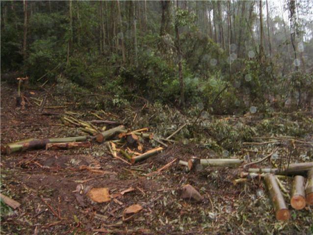 silvicultura1